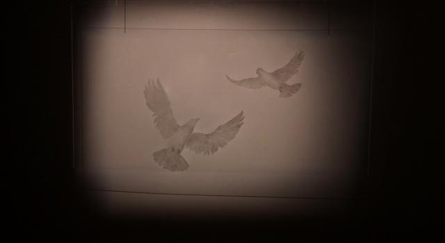 2. Two Doves 2014 ( plexiglas,  drypoint, shadow)(90x158cm).jpg