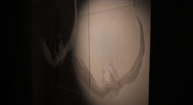 3. The Fall 2014 ( plexiglas, drypoint, shadow)(100x137 cm).jpg